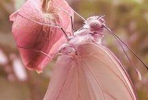 Butterfly Dreams / by Dawn Costner