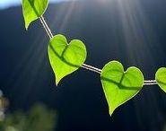 THE BEST ∞ Vida / GREEN - INSPIRATION