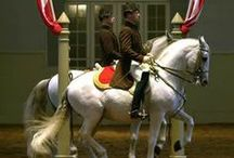 SRS Did you know / Interesting facts about the Spanish Riding School