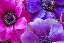 ♥Flowers♥ / Beautiful Flowers. / by Marian Bentz