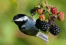 Birds / by Laurette Slegers