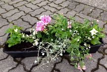 Gardening / Store og små prosjekter