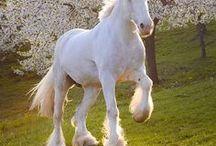 Horses/Draft