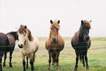 Horses/Ponies