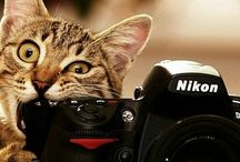 Photocats / All Cats in photo