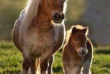 Horses/SP, ASP & AM