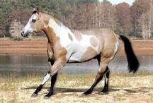 Horse's colors/Patches / - Tobiano - frame overo - splash - sabino - tovero - overo