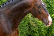 Horse's colors/Bays
