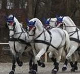 Horses/Carriage Driving Harnesses