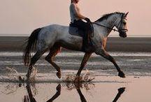 Horses/Dressage