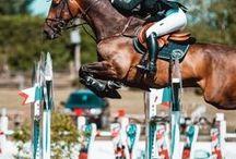 Horses/Jumping