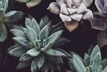 Succulents. We love nature. / Succulent. We love nature. #succulent #nature #selsey #ideas #inspiration
