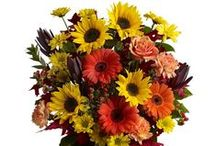 Fall Bouquets / Gorgeous Autumn-themed bouquets, featuring all the colors of the season and flowers like Gerbera Daisies, Sunflowers and Carnations.