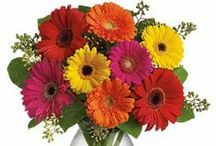 Bright Gerbera Daisy Bouquets / Gorgeous and Trendy Gerbera Daisy Bouquets