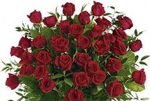 Roses / Beautiful Roses for less from Bloomex.ca