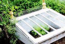 Healthy Happy Living / Kruiden- en groente tuin