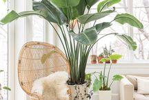 Pflanzen / Kein Möbelstück kann einem Raum so viel Gemütlichkeit verleihen wie eine Pflanze <3