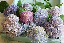 ❋flowers❋ / Beautiful flowers...