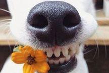Rir faz bem a saude. / Situações engraçadas, gifs e animações em geral.