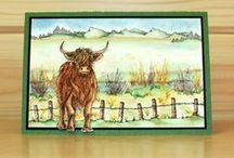 Highland Cattle / CS120D 'Highland Cattle' Clear set contains 12 stamps designed by the very talented Sharon Bennett for Hobby Art Stamps. Overall size of set - 100mm x 260mm approx. All our clear stamps are made with photopolymer resin.  / by Hobby Art Stamps