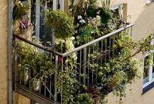 Terrace gardening / #URBANGARDEN #IDEAS #TERRACE #URBANGARDENING #BALCONY #GREEN