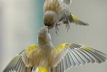 Aves  / Me encantan los pájaros porque me identifico con ellos y me gusta que esten libres y escuchar sus trinos que son muy variados. / by Ma Eugenia Salazar