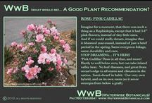 Plant ID Cards / Welcome to a new series of information.  Plant recommendations from Waterwise Botanicals. Learn about the cutting-edge plants for the next generation of landscaping.  Watch for follow-ups of plant specifications on a regular basis!