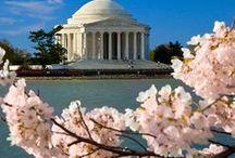 Washington D.C. / by Brenda P