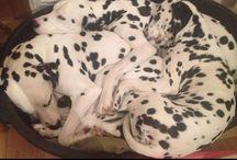 Dogs / Canine Cuteness