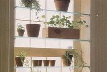 Gardening in South Florida / Gardening in Florida for your own home in your backyard.
