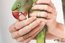 Jewels & Animals / Photography that combines the beauty of both of natures gems...