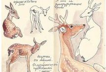 Oh Deery Me! / As the deer pants for the water ~Psalm 42:1