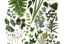 Plants / and beautiful plant inspiration