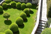 Droomtuin jardin garden