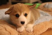 CUDDLY DOGS / Cute Doggies / by Angela Chua