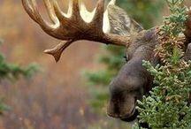 Wildlife I Love / animals / by Micki Sowell