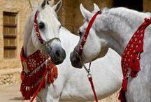 Arabian Horses / by Micki Sowell