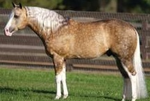 Quarter Horses, Pintos / by Micki Sowell