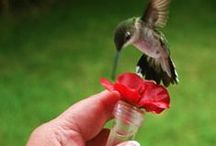 Butterflies, Hummingbirds and other cool critters / Butterflies and Hummingbirds are known to be curious and friendly  / by Richard Incrocci