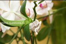 Горшечные и садовые цветы: уход, разведение, опоры