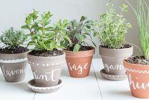 •herbs•