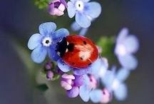 LADYBUG ❤️❤️❤️.  MARIHØNE. / WELCOME to LADYBUG.   ❤️❤️❤️  MARIHØNER                                They are  MAGISKE.     Pin  as. much as you want .              Have a HAPPY day