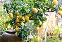 Things i like in the garden, ting jeg liker i hagen / Gode ideer for hagen, grønne vegger, grønne planter, koselige steder.