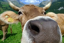 Agricultural Tours  / A selection of fun and interesting agricultural pictures