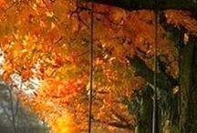Autumn -  jesenné tvorenie