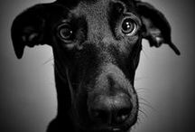 Animals / #chiens #chats #youaresocute  Thanks you are here!