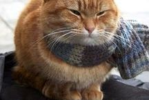 Bob le chat
