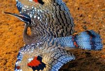 AMAZINGLY  CHARACTERISTICS MISLEADING AND DESEPTIVE  OF ANIMALS / HARACTIRISTIKA ZOON EXAPATISIS KAI PARAPLANISIS