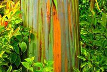 Amassing  trees colorful / Δένδρα με απίστευτους  λογαριασμούς