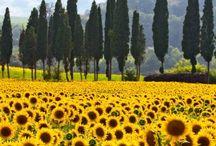 Tuscany / by Helen Hughes